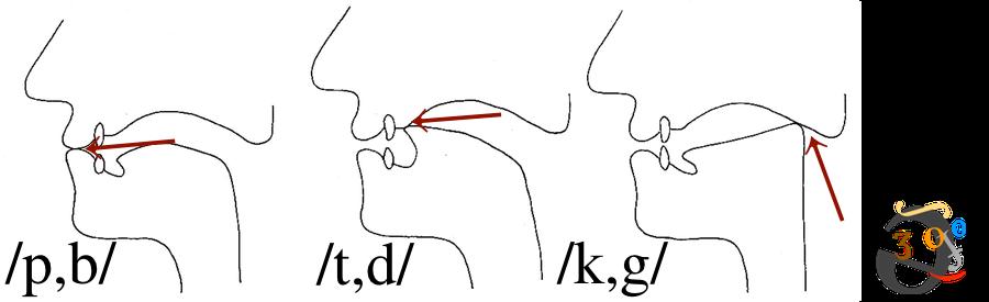 plosive-positions